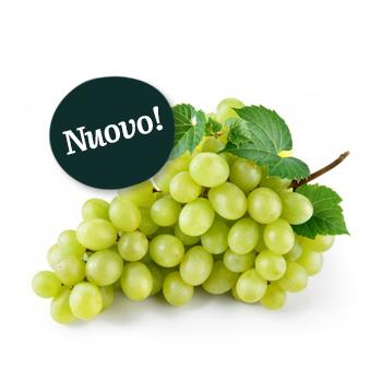 ambruosi-uva-bianca