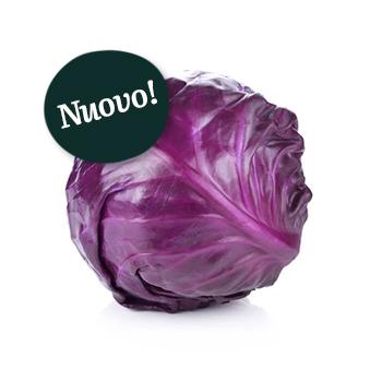 ambruosi_cavolocappuccio-viola