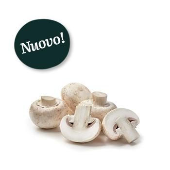 ambruosi_funghi-champignon-new